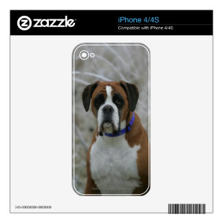 Boxer Dog Sitting in the Frost Decal For The iPhone 4S