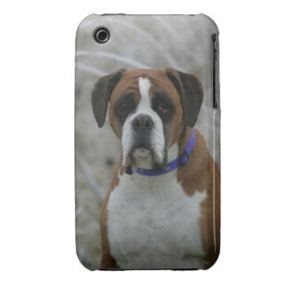Boxer Dog Sitting in the Frost iPhone 3 Case-Mate Case