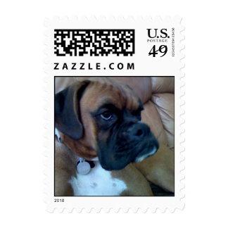 boxer dog stamp