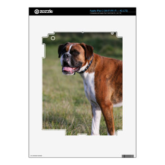 Boxer Dog Standing iPad 3 Skin