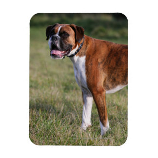 Boxer Dog Standing Magnet