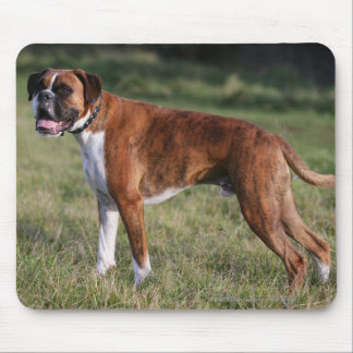 Boxer Dog Standing Mouse Pad