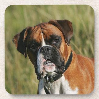 Boxer Dog Staring at Camera Beverage Coaster