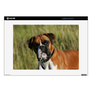 Boxer Dog Staring at Camera Decal For Laptop