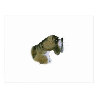 boxer dog, tony fernandes postcard