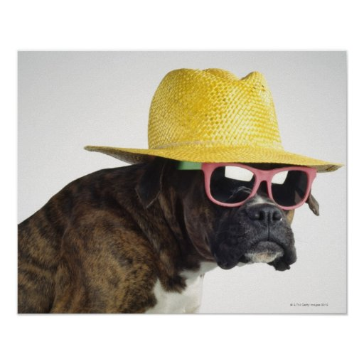 Boxer dog with hat and glasses print