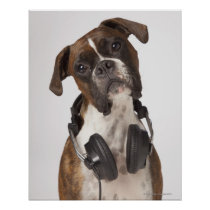 boxer dog with headphones poster