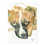 Boxer Doggie Buddy Post Cards