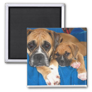 Boxer dogs 2 inch square magnet