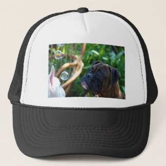 Boxer dogs and bubbles cap