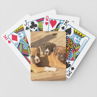 Boxer dogs playing cards