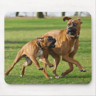 Boxer dogs run a funny race mouse pad