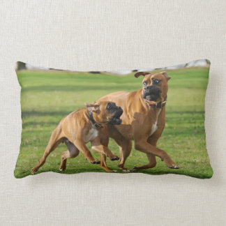 Boxer dogs run a funny race pillow