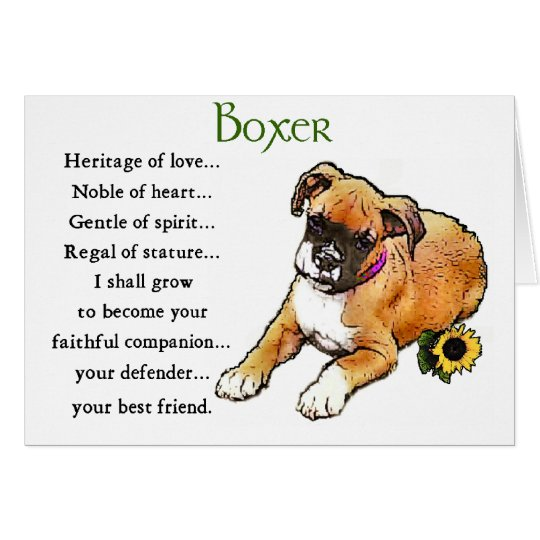 Boxer Gifts Card