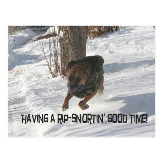 Boxer:  Having a Rip-Snortin' Good Time Postcard