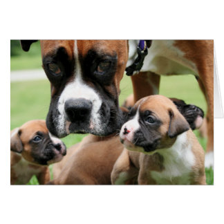 Boxer - Helicopter Mom Card