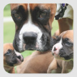 Boxer - Helicopter Mom Square Sticker