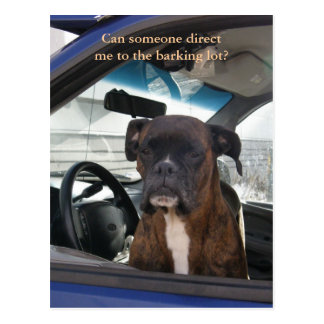 Boxer in the Driver s Seat in Dutch Harbor AK Postcard