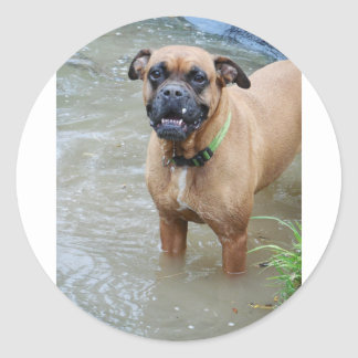 boxer in water.png classic round sticker