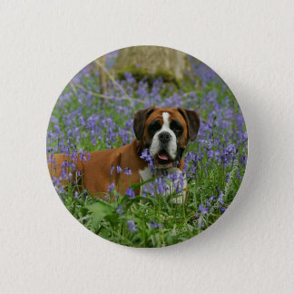Boxer Laying in Bluebells Button