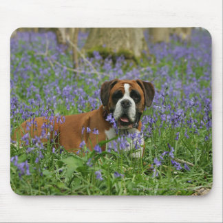 Boxer Laying in Bluebells Mouse Pad