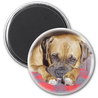 Boxer:  Look Ma, No Cavities Magnet