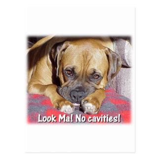 Boxer:  Look Ma, No Cavities Postcard