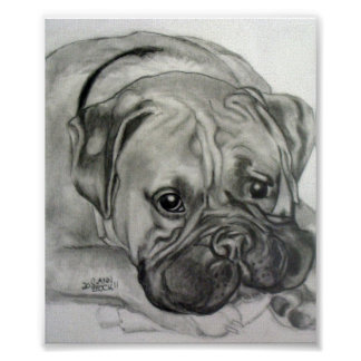 """Boxer Love""- Original artwork by Carol Zeock Poster"