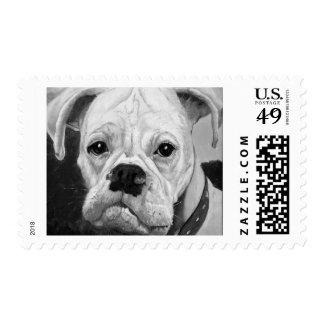 Boxer Love Postage Stamp Sm
