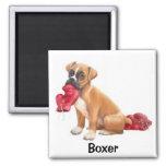 Boxer Magnet