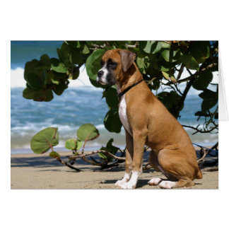 Boxer Note Card