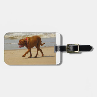 boxer on beach.png bag tag