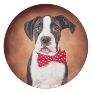 Boxer pup dinner plate