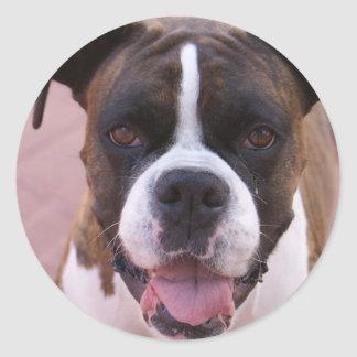 Boxer Pup Stickers