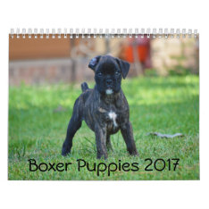 Boxer Puppies 2017 Calendar at Zazzle