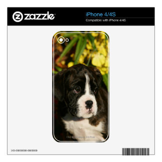 Boxer Puppies Decal For The iPhone 4S