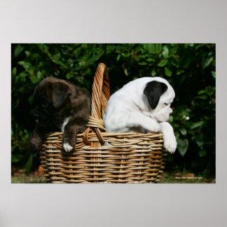 Boxer Puppies in Basket Print