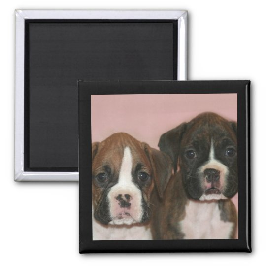Boxer Puppies magnet