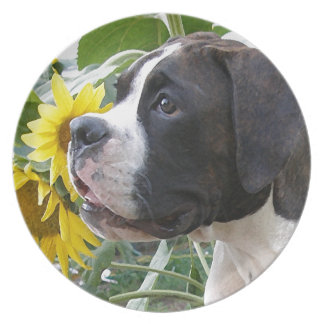 Boxer Puppy and Sunflowers Dinner Plates