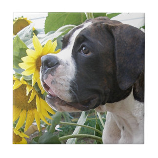 Boxer Puppy and Sunflowers Small Square Tile