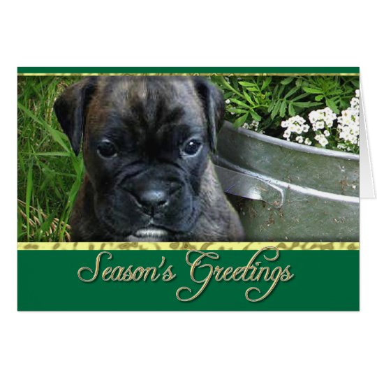 Boxer puppy card