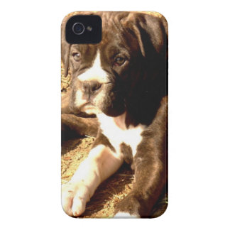 Boxer Puppy Case-Mate iPhone 4 Case