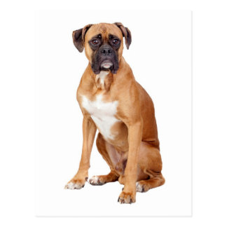 Boxer Puppy Dog Blank Greeting Postcard