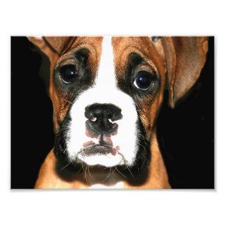 Boxer puppy dog photograph