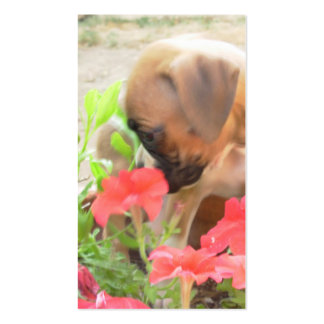 Boxer puppy in petunias business cards