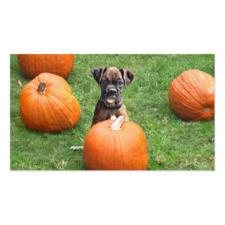 Boxer puppy in pumpkin patch business cards