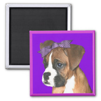 Boxer puppy in Purple Magnet