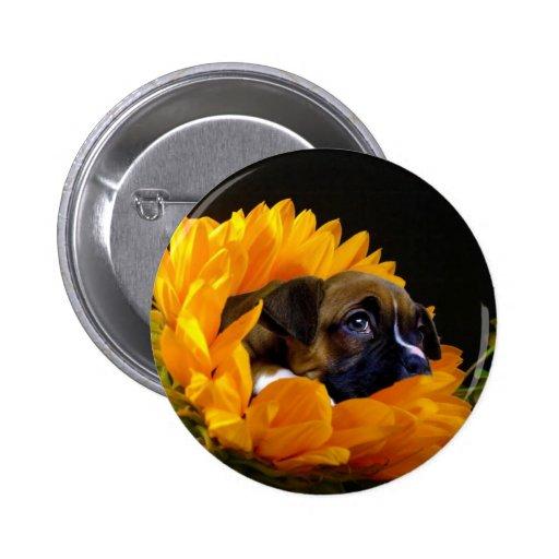 Boxer puppy in Sunflower button