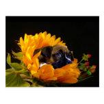 Boxer puppy in Sunflower postcard