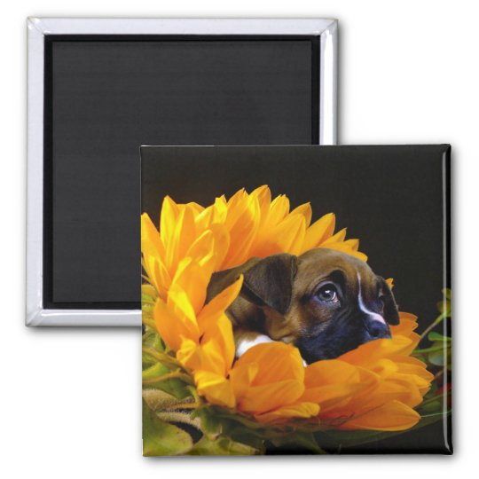 Boxer puppy in Sunflower square magnet